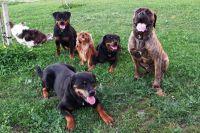 socializacia_psov