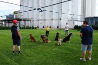 72_vycvik_psov_skupinovy_pokrocili
